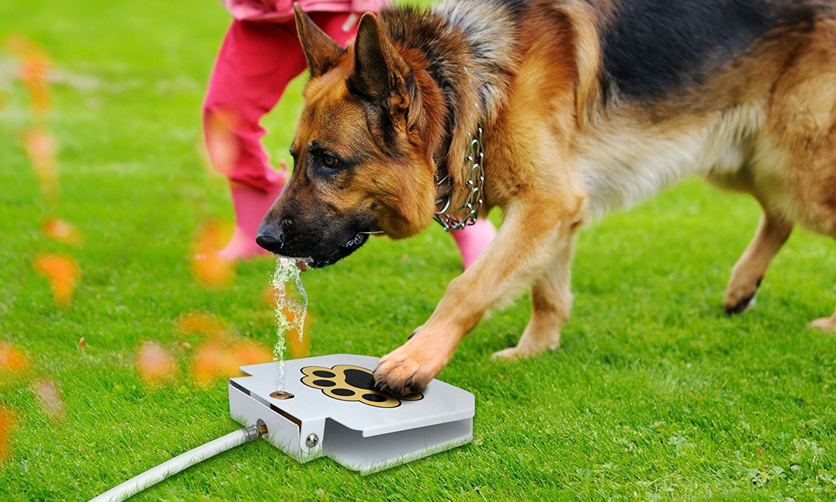The 5 Best Outdoor Dog Toys