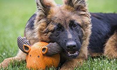 HuggleHounds Extremely Durable Ruff-Tex Latex Dog Toy