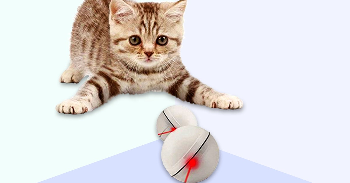 The 7 Best Cat Toys For Active Cats