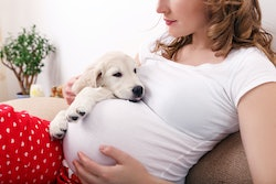 woman holding pregnant belly on couch with small golden retriever puppy in other arm
