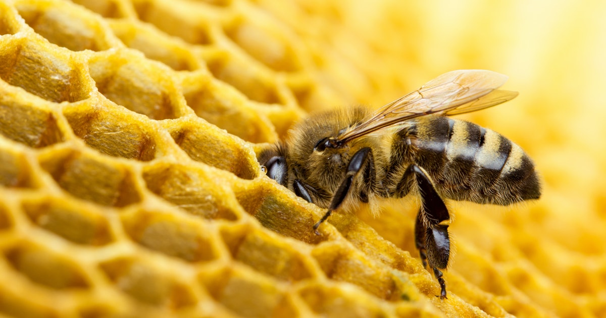 Bees Know What 'Zero' Is, According To A New Study, & It's Kind Of A Big Deal