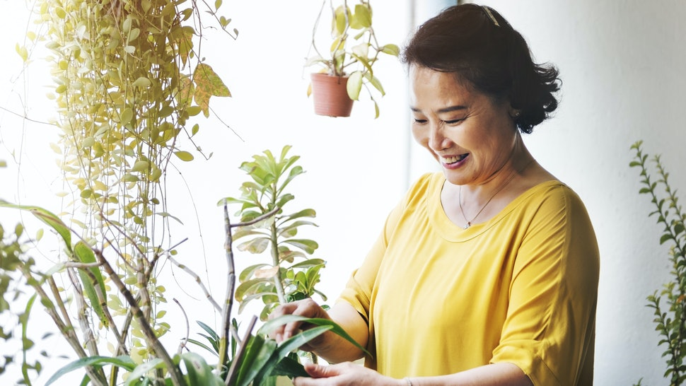 7 Ways Houseplants Can Affect Your Physical Health Hypoallergenic House Plants on non toxic house plants, allergy house plants, long lasting house plants, durable house plants,