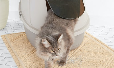 AmazonBasics Hooded Cat Litter Box