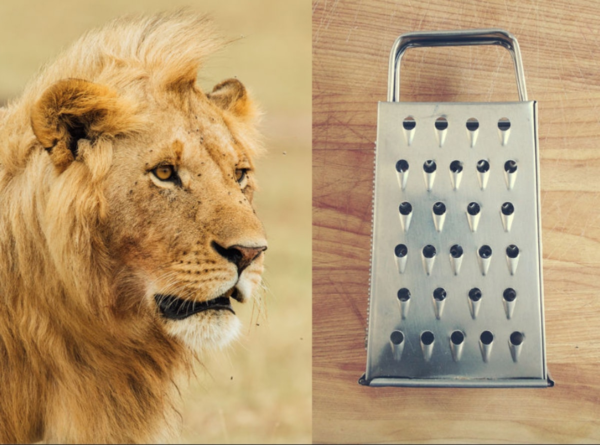 What Is The Lioness On A Cheese Grater? A Sexpert Explains Ancient Greece's Hottest Sex Move