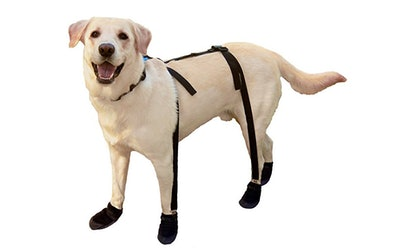 Canine Footwear Solutions