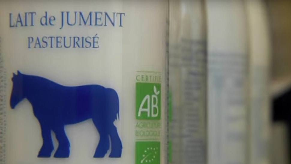 What Is Mare Milk? Horse Milk Is Apparently A Growing Trend