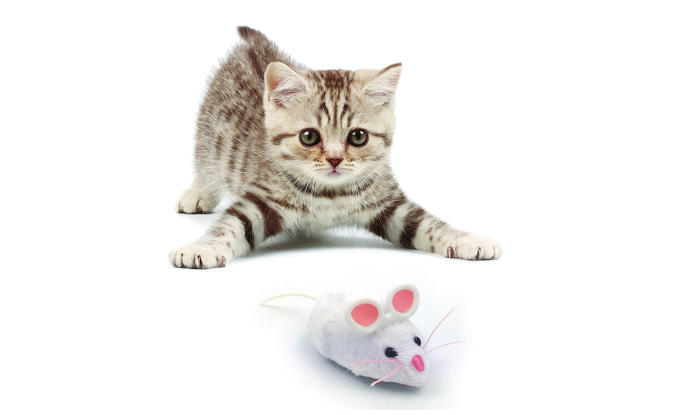 The best toy for a kitten by own hands