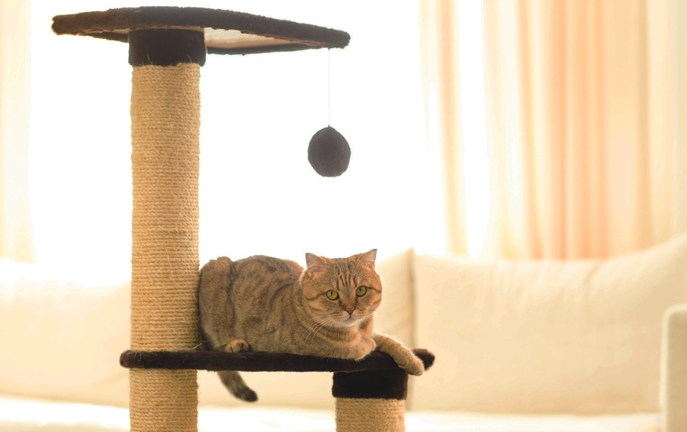 Buying a Cat Tree
