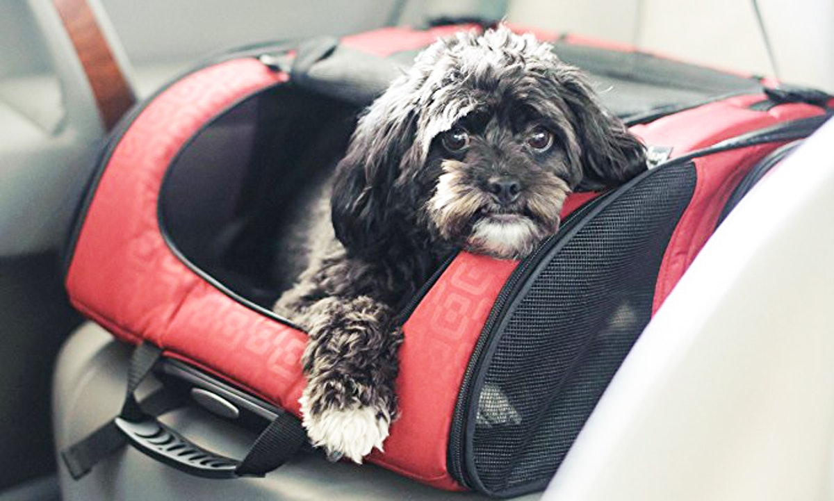 The 5 Best Airline Approved Pet Carriers For Under The Seat