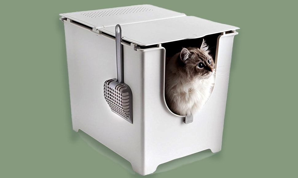 auto litter box for cats