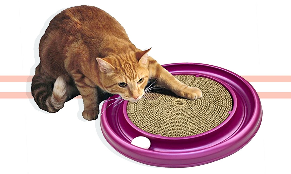 The 6 Best Toys For Large Cats