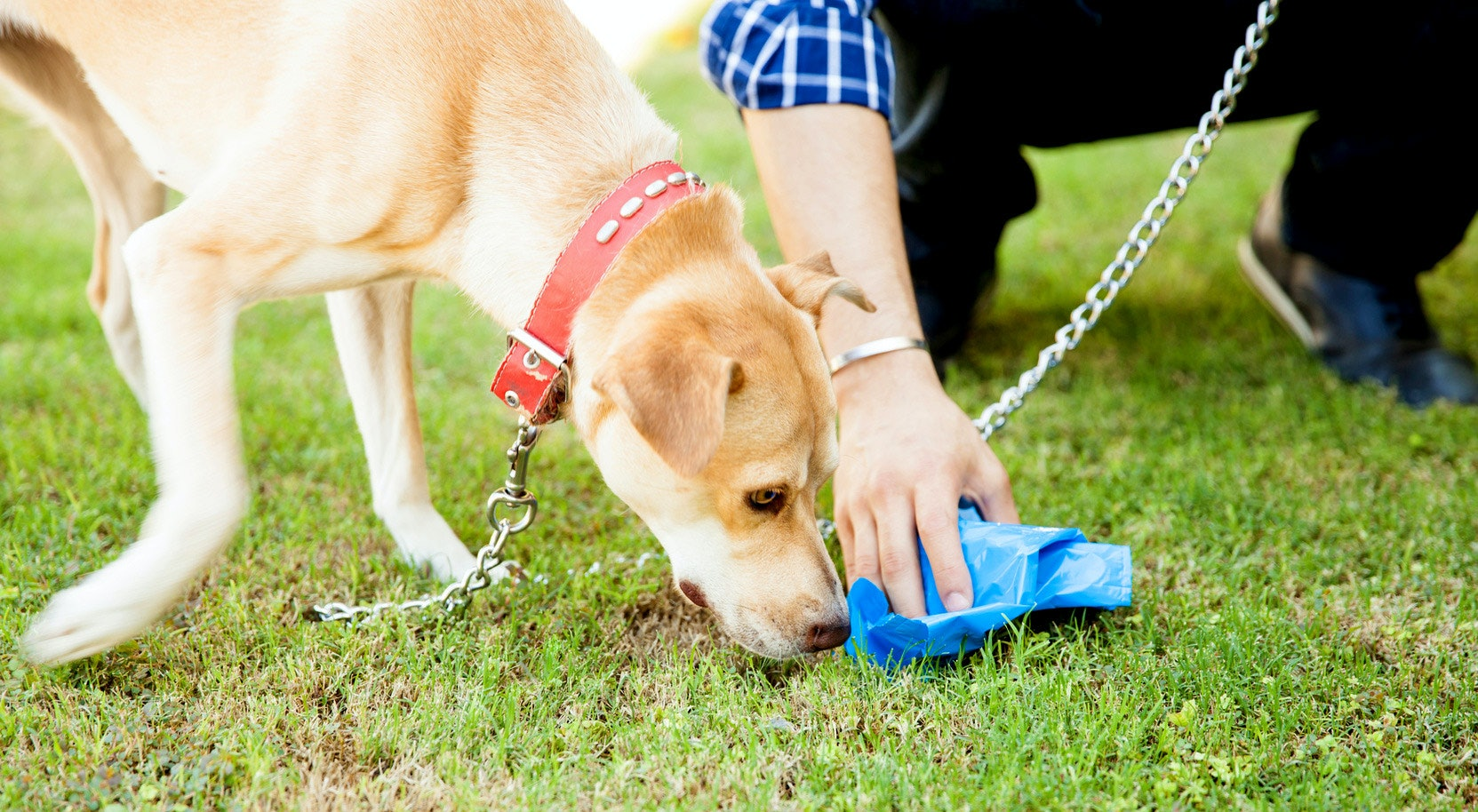 3ad7314d01d2 The 5 Best Biodegradable Dog Poop Bags