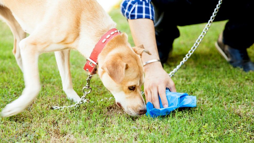 The 5 Best Biodegradable Dog Bags