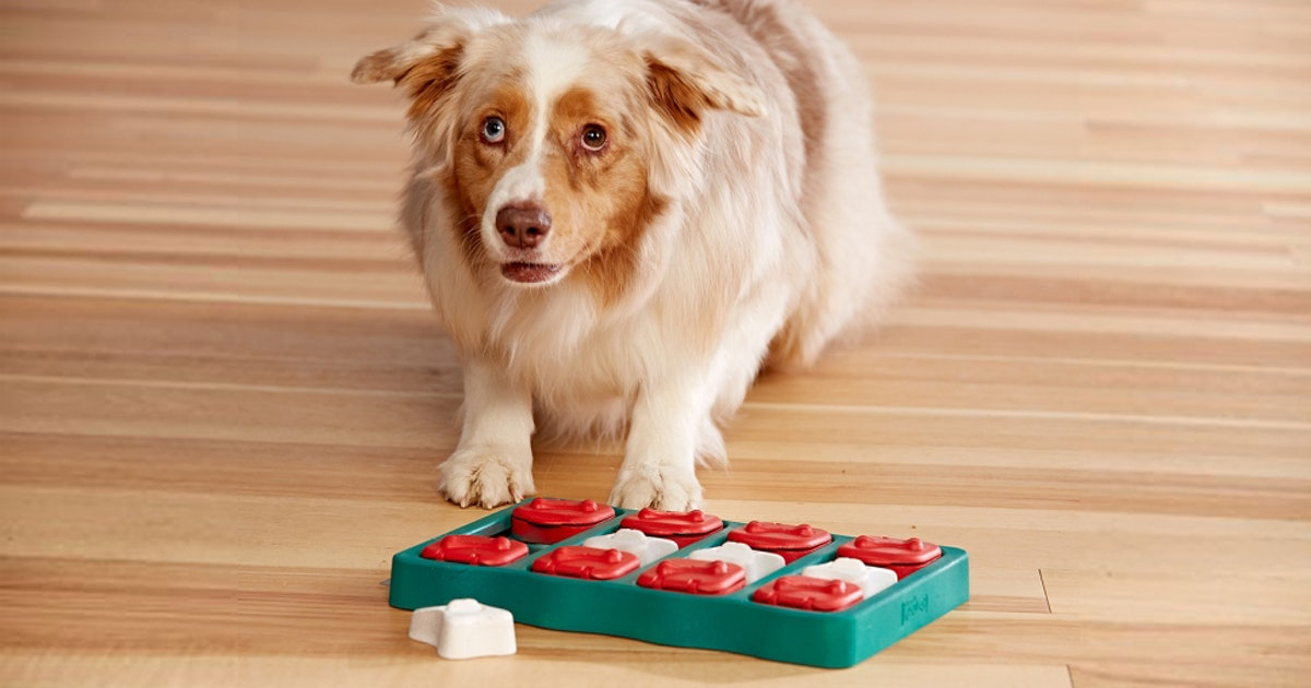 The 5 Best Toys For Smart Dogs