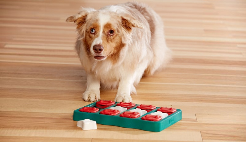 best toys for smart dogs