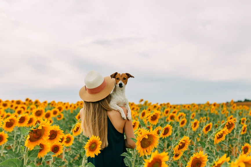 8 Clever Pictures To Take In A Sunflower Field This Fall For A Blooming Feed