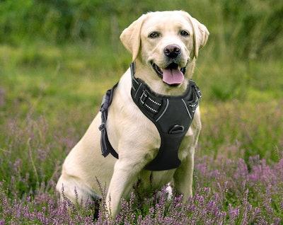 RABBITGOO No Pull Large Dog Harness