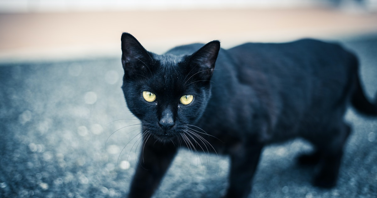 It's Black Cat Appreciation Day, & This Is Why Everyone ...