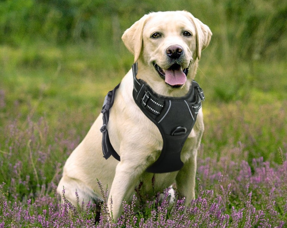 Image of: Pet Foods Youtube The Best Harnesses For Large Dogs