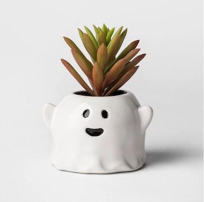 Ghost Succulent