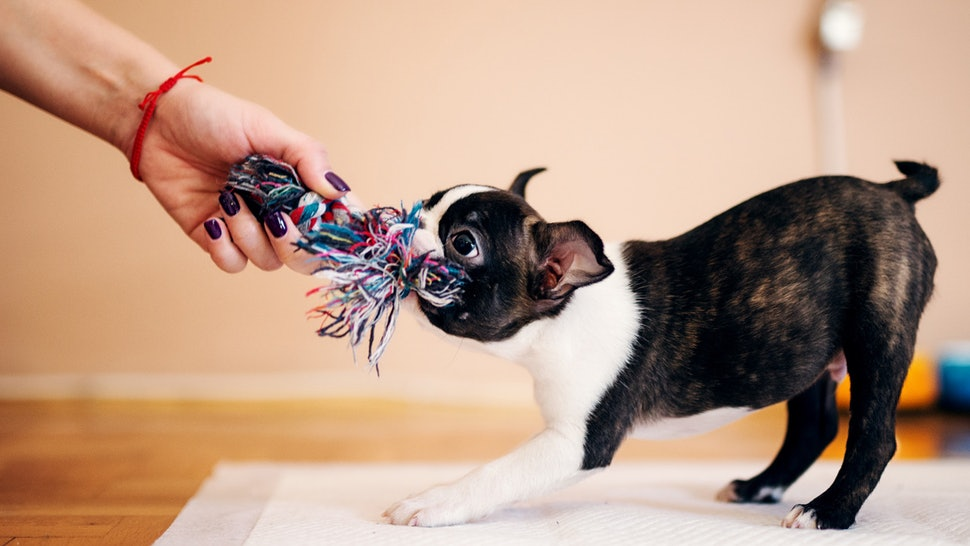 The 6 Best Indestructible Dog Chew Toys