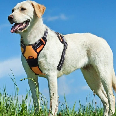 Eagloo No Pull Dog Harness With Front Clip