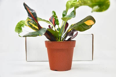 Monthly House Plant Box