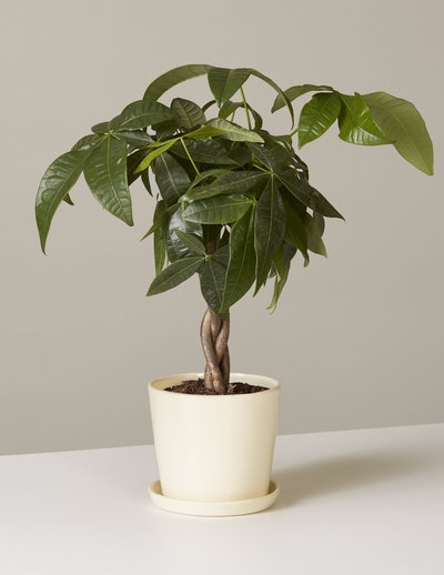The Plant Parent Club Monthly Subscription
