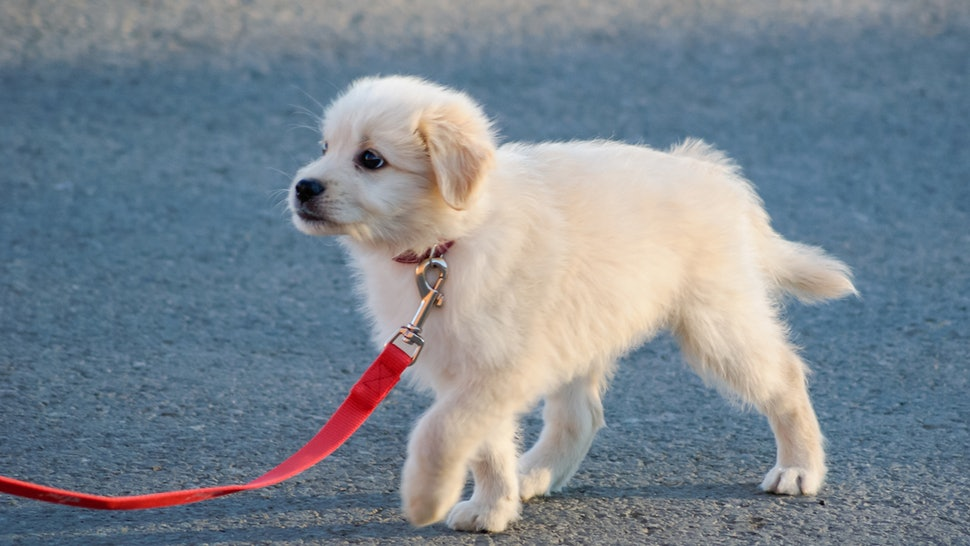 The 6 Best Dog Leashes For Puppies