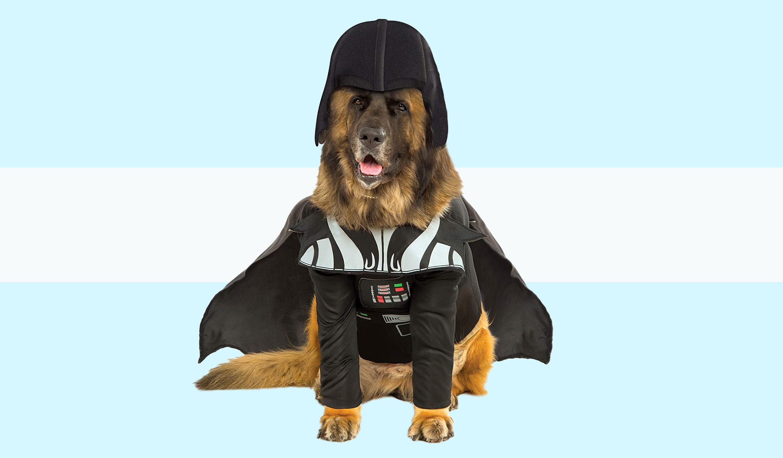 the 6 best big dog costumes