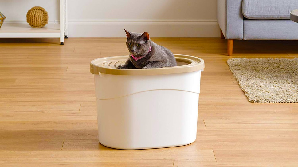 The 4 Best Litter Boxes For Cats That Spray