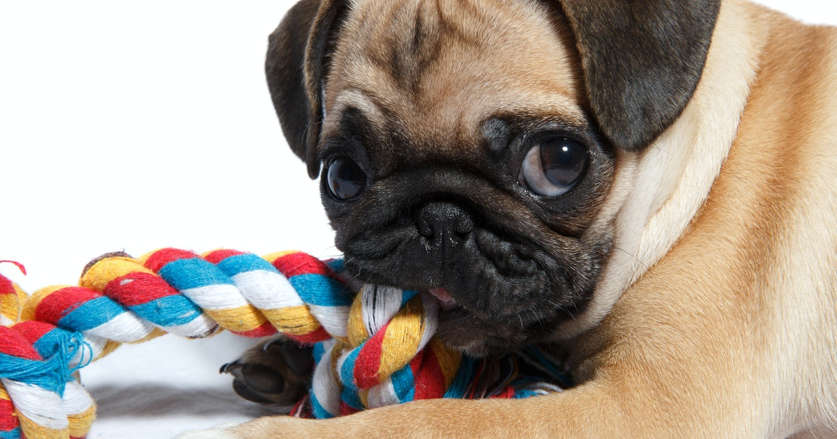 6 Durable Dog Toys Your Pup Won't Be Able To Chew Through (Even Though They'll Try)