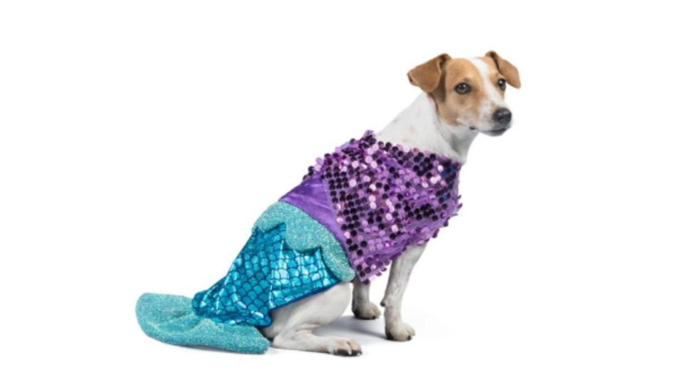 13 cutest halloween 2018 costumes from petsmart for dogs guinea