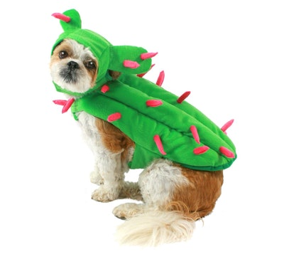 Cactus Dog Costume Set - Boots & Barkley™