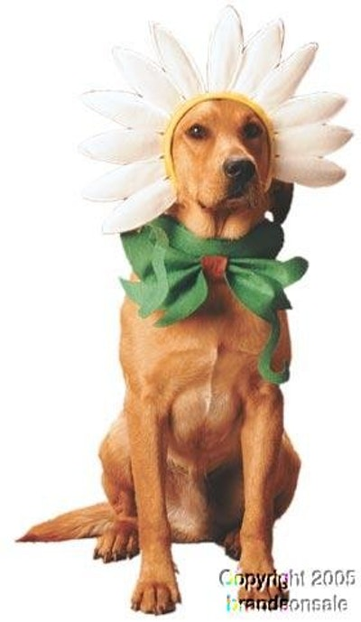 Daisy Dog Halloween Costume For Large Dogs
