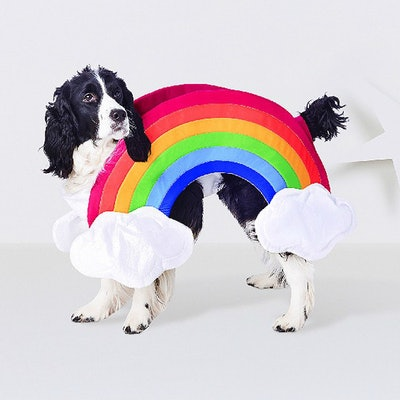 Rainbow Dog Costume - Hyde and Eek! Boutique