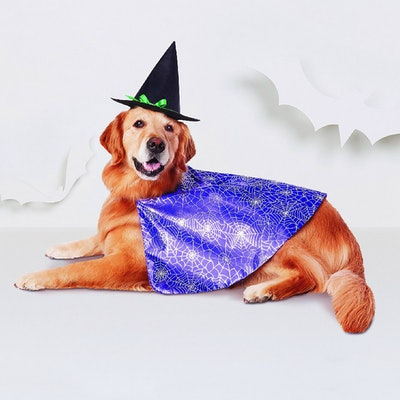 Witch Dog Costume - Purple - Hyde and Eek! Boutique