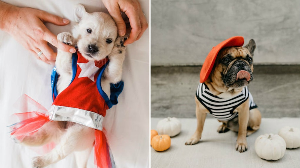 33 Halloween Captions For Your Pets Costume Because They Know They