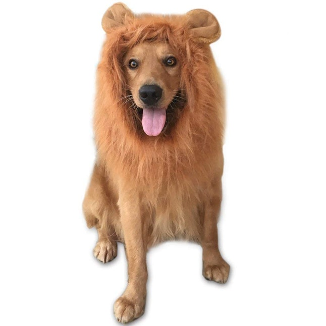 b7f6de3017ae Zack & Zoey Polo Dog & Cat Shirt, $12.92, Chewy; GABOSS Lion Mane Costume,  $11.99, Amazon; Plus Off Shoulder Solid Dress, $17.59, Romwe; Yellow  Gloves, ...