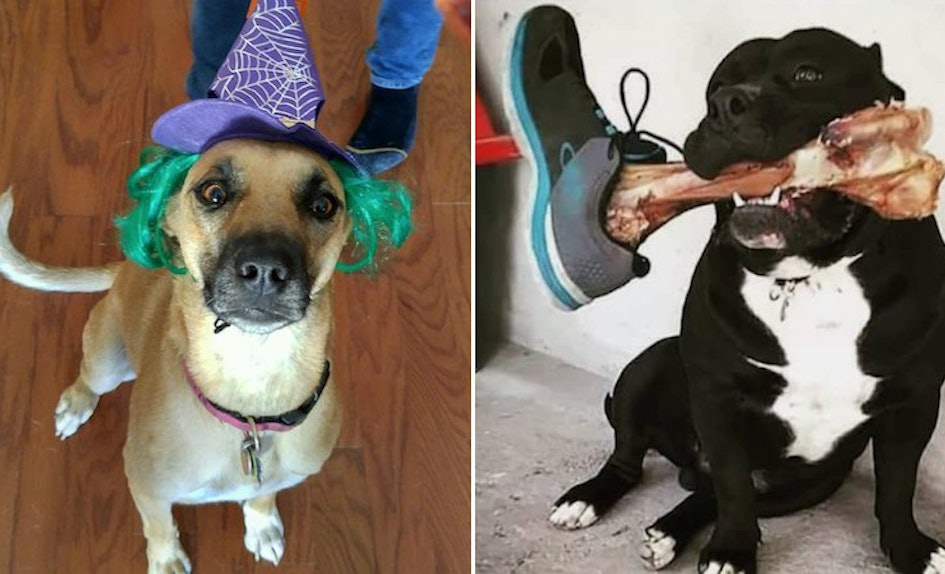 11 photos of dogs halloween costumes that prove theyre totally winning the costume contest