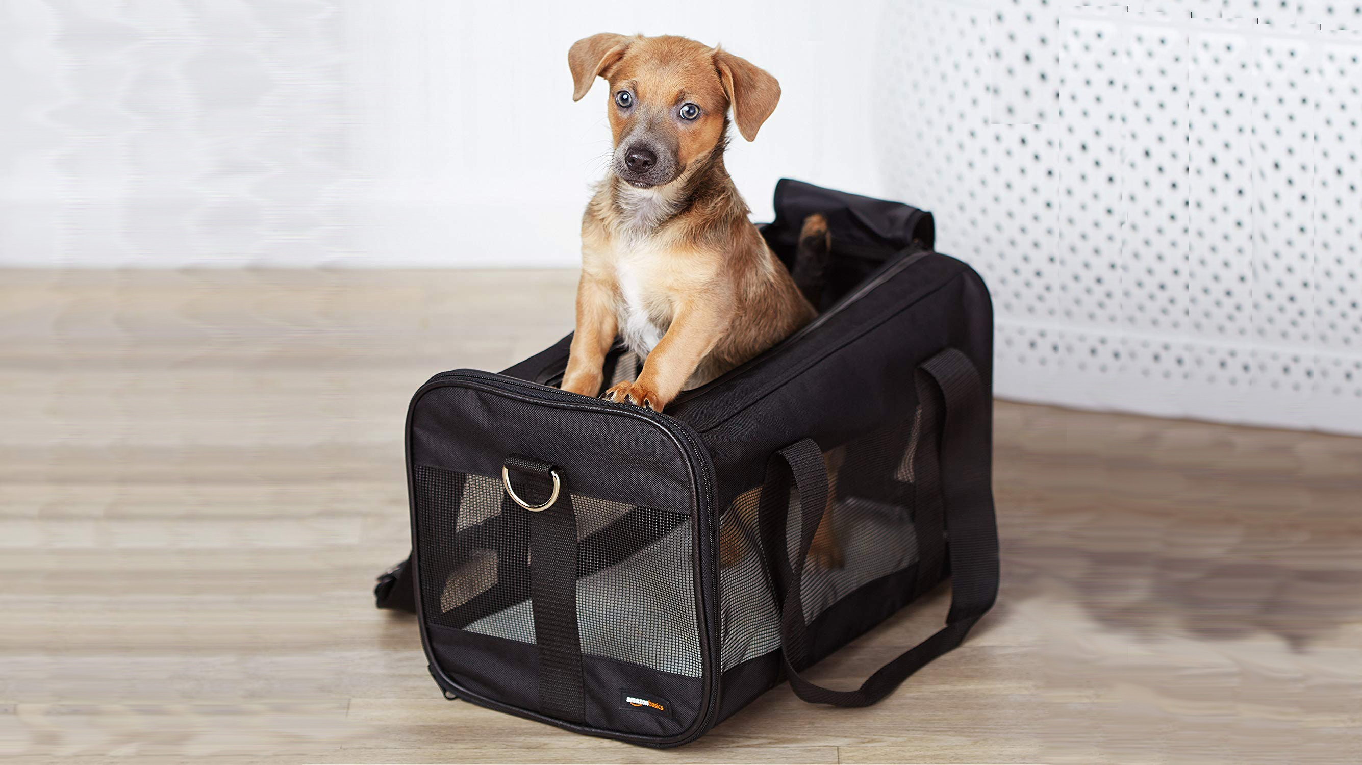 The 7 Best Dog Carriers For Airline Travel
