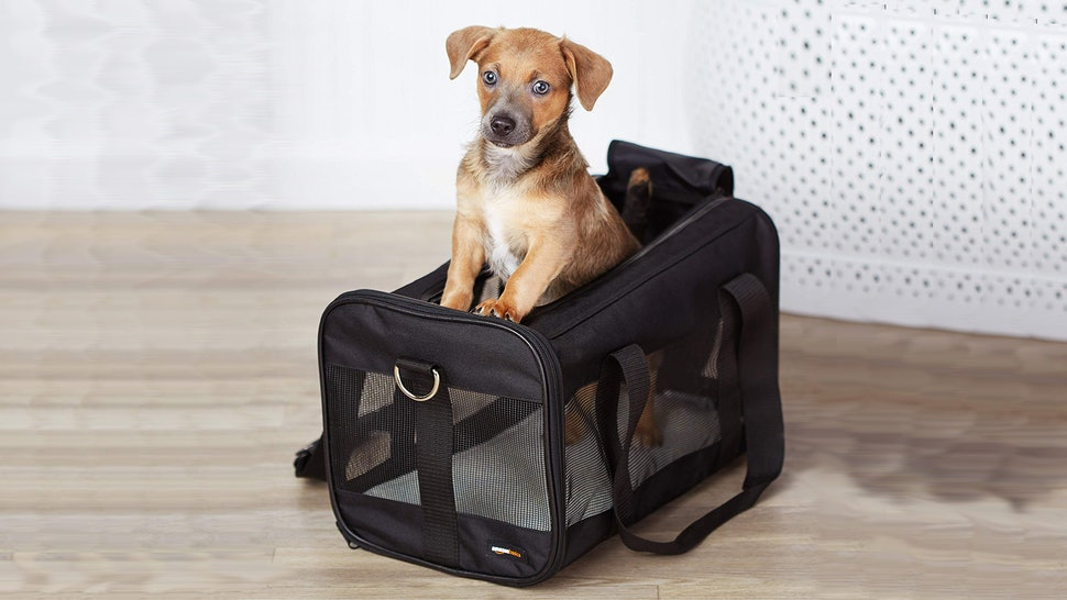 84ea76c91b95 The 7 Best Dog Carriers For Airline Travel
