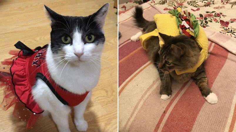 14 Photos Of Cats\u0027 Halloween Costumes That\u0027ll Definitely