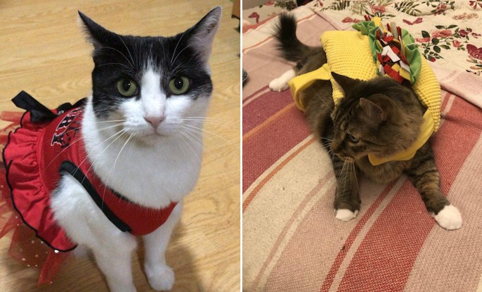14 photos of cats halloween costumes thatll definitely have you feline spooky