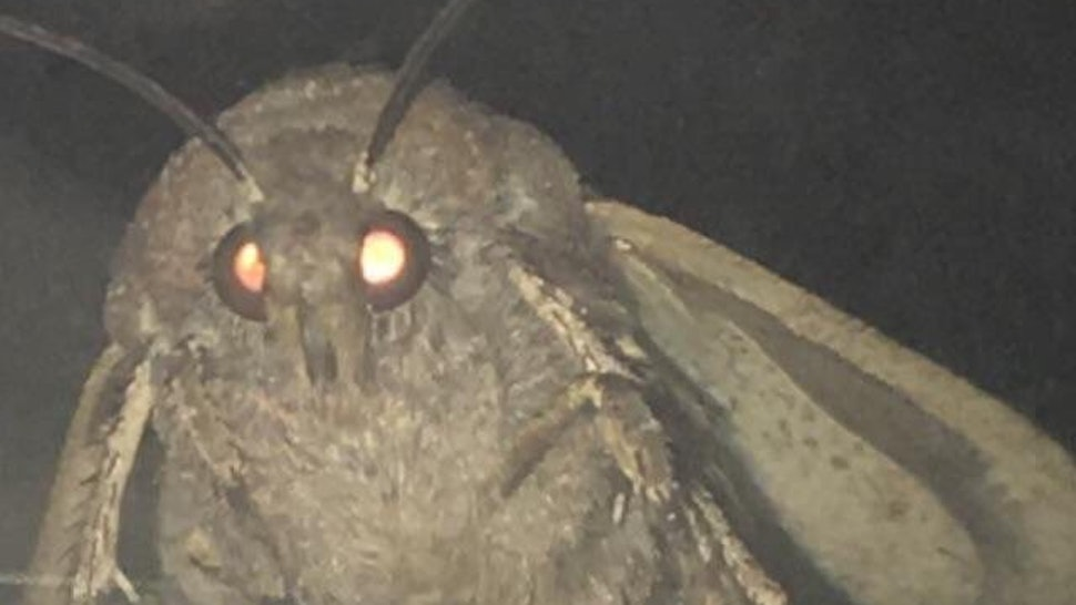 What Is The Moth Lamp Meme Heres Why You Keep Seeing This Meme On