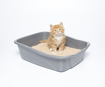 sWheat Scoop All-Natural Clumping Cat Litter (7 Pounds)