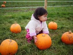 little girl in pumpkin patch