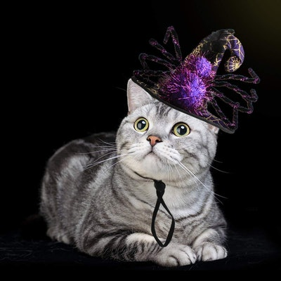 Pet Leso Cat Witch Hat