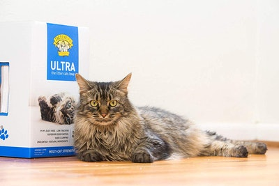 Dr. Elsey's Cat Ultra-Premium Clumping Cat Litter