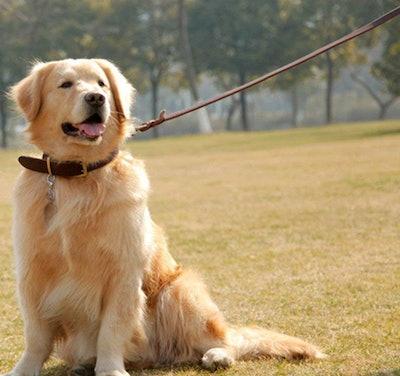 Faylife Military Grade Dog Leash